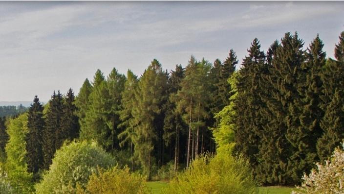 Gemeinsam mit dem Wald in die Zukunft